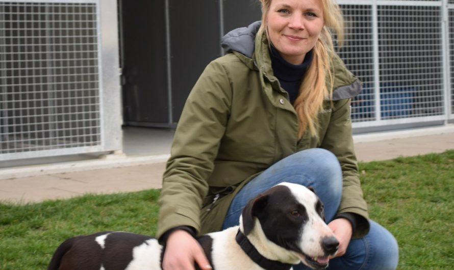 Befristete Befreiung von der Hundesteuer für aufgenommene Tiere