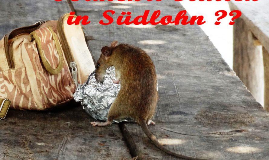 Wie bemerke ich einen Rattenbefall?