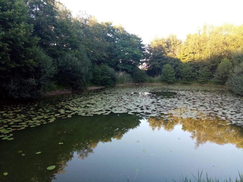 Angelverein ASV Oeding zweite Teichanlage